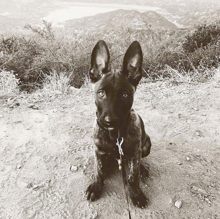 Channing Tatum Adopts Sweet New Dog Named Rooklin