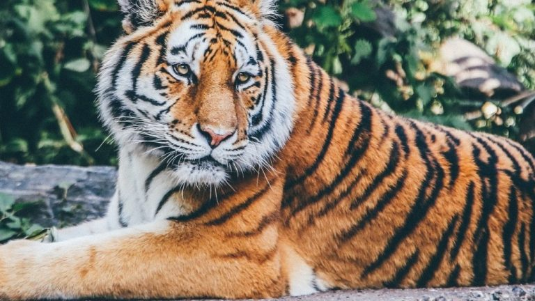 House Passes Bill To Protect Big Cats—Inspired By The Netflix Series Tiger King
